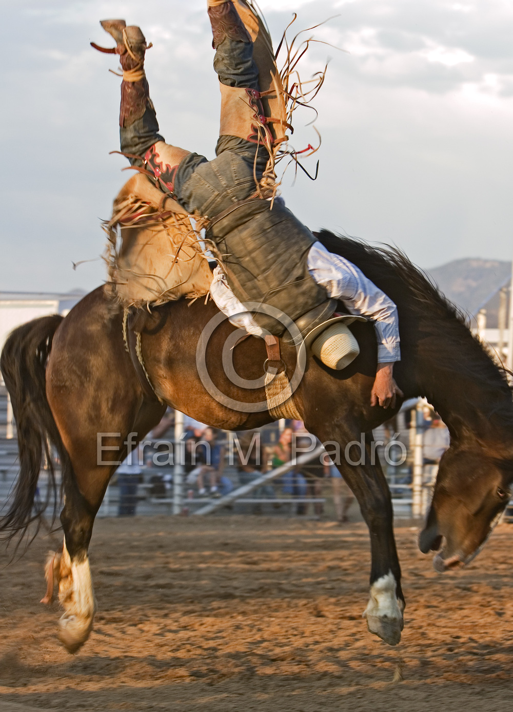 Cowboy upside down on bucking horse, bareback riding competition, Rodeo de Santa Fe, New Mexico
