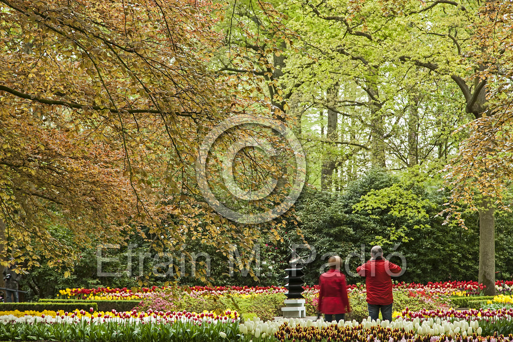 Couple amid trees and flower displays, Keukenhof Gardens, near Lisse, Holland