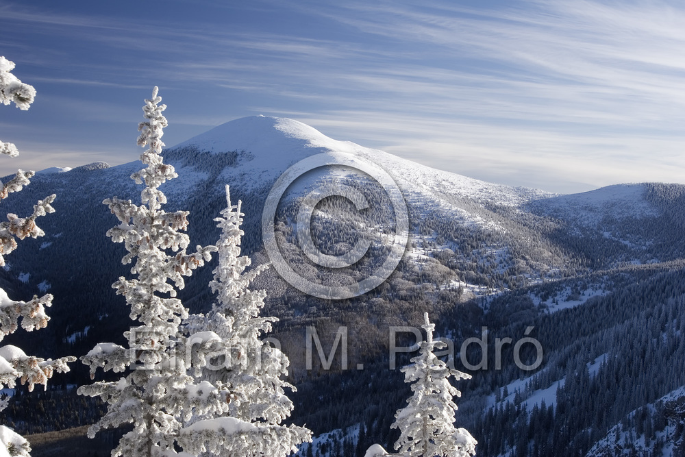 Snow covered trees & Santa Fe Baldy (12,622 ft.) from Ravens Ridge Trail, Santa Fe NF, New Mexico