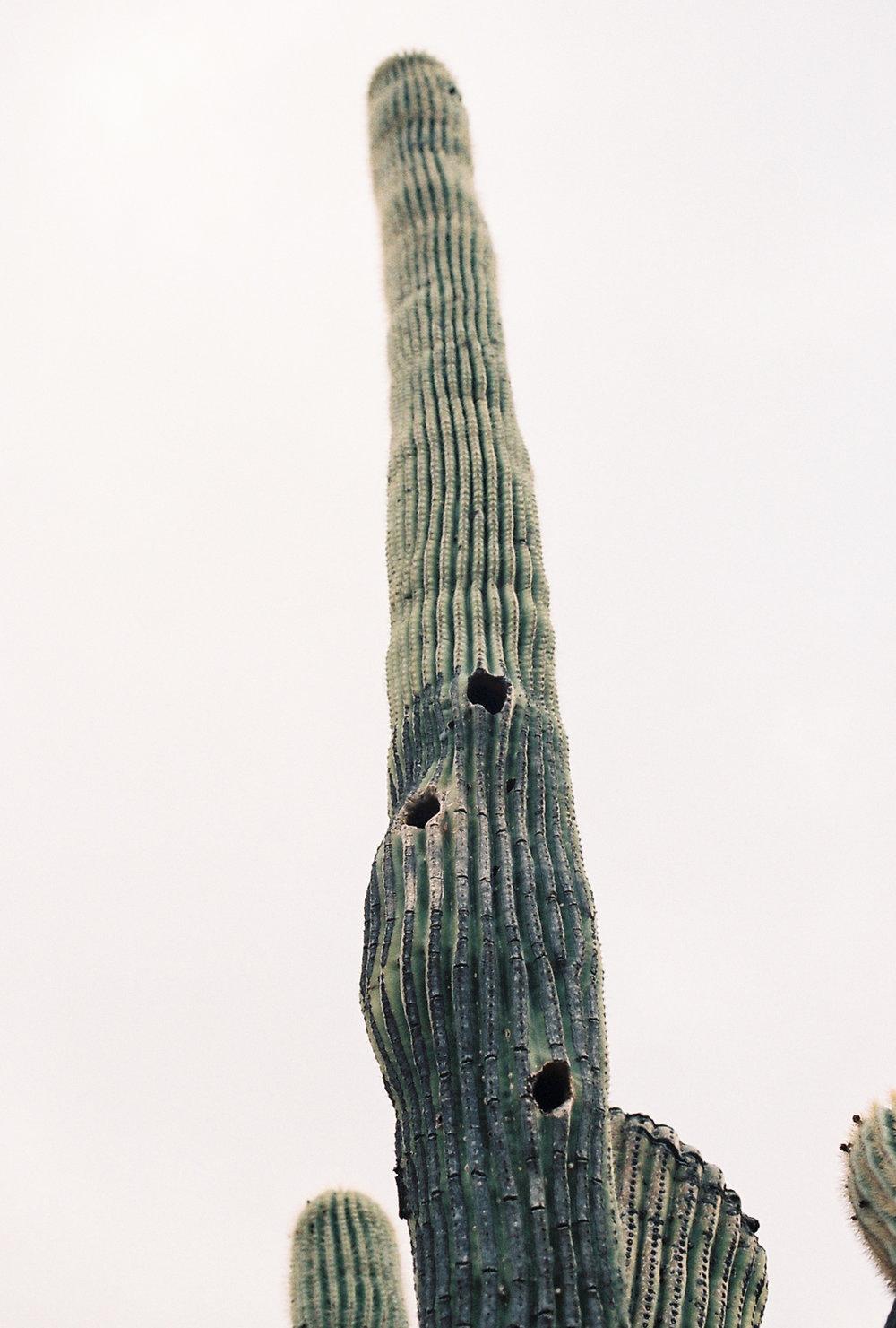 AZ-PLANT-32.jpg