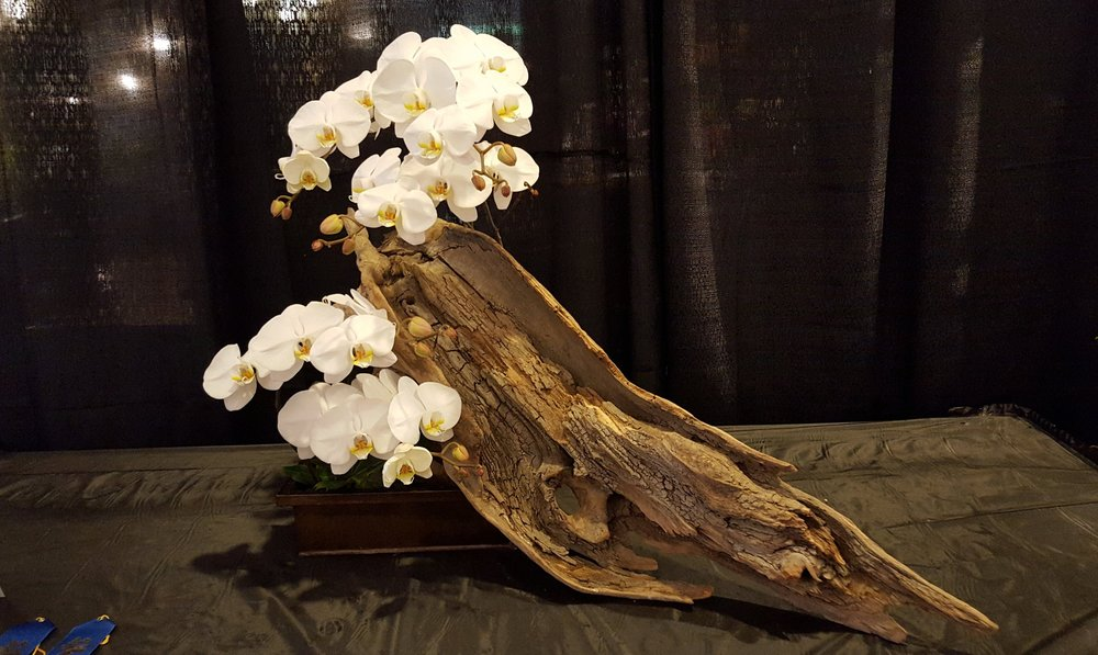 This arrangement puts orchids on display with driftwood, in combination suggesting many other forms, both real and imagined, at the Atlanta Orchid Society show 2017.