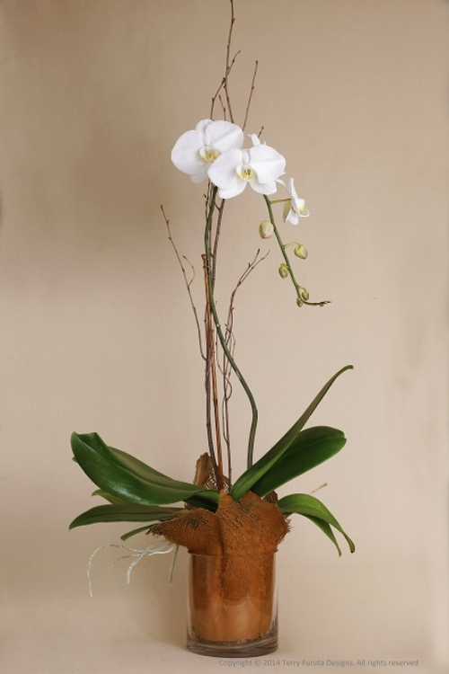 Phalaenopsis Orchid in Palm Bark