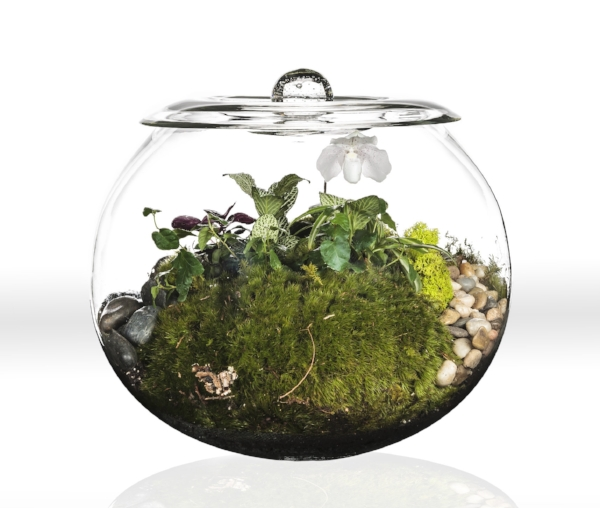 Terrarium Globe with Lid and Lady Slipper.jpg