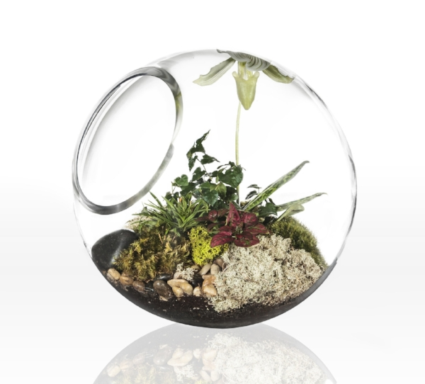 Terrarium Globe Open with Lady Slipper.jpg