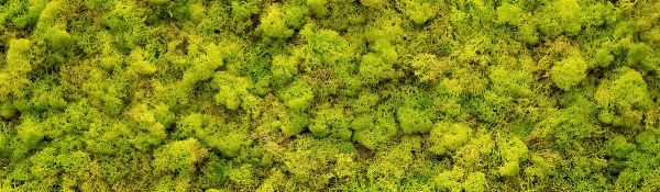 Preserved moss walls meet sustainability and design criteria better than living walls