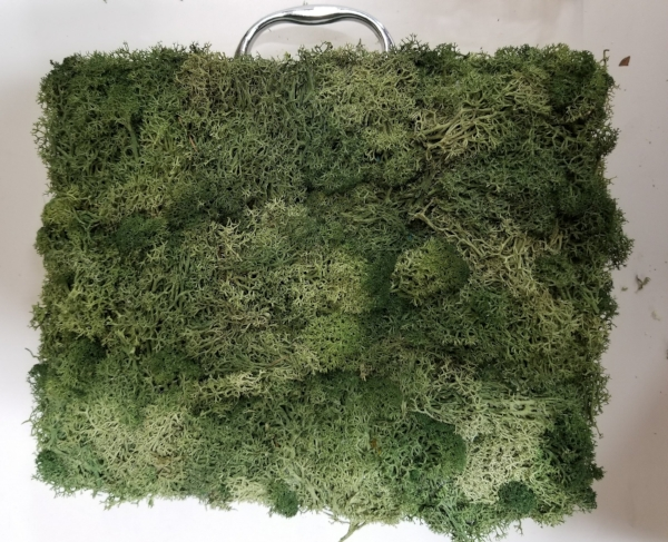 Preserved moss can adorn most any object for a centerpiece that complements your event theme.