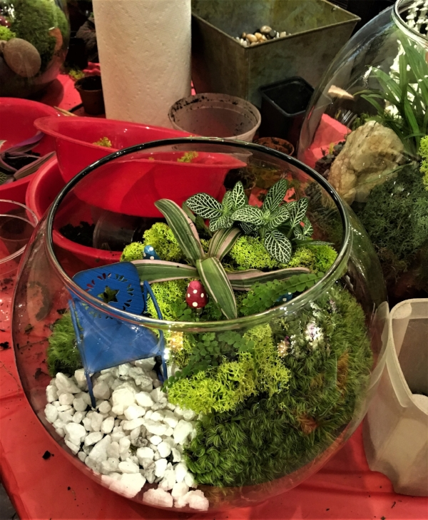 Terrariums are tiny ecosystems that can sustain themselves indefinitely with little maintenance.