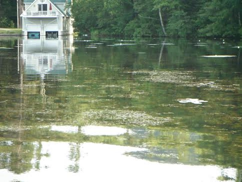 EWM matting on the surface in Lake Dunmore, North Cove: photo as found on Google images