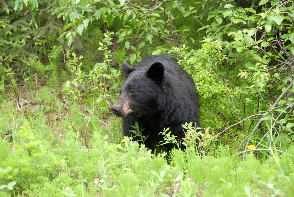 brown-bear-566727_1920.jpg