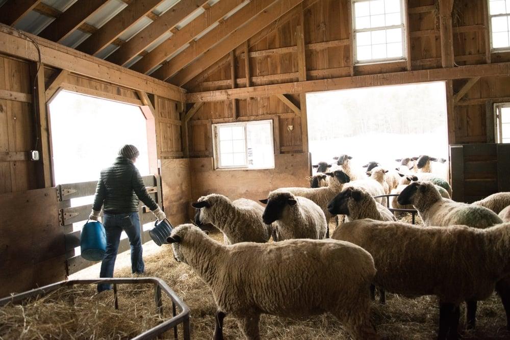 North Star Sheep Farm-108.jpg