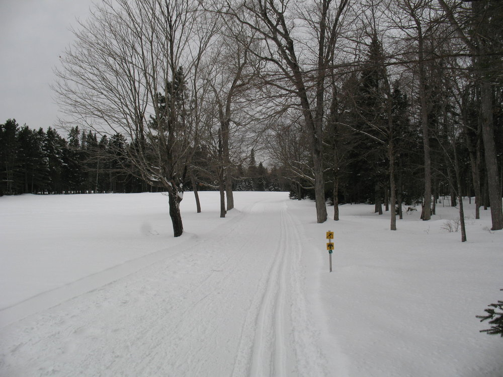 On the green trail at Mactaquac about 2 pm Jan 7th.