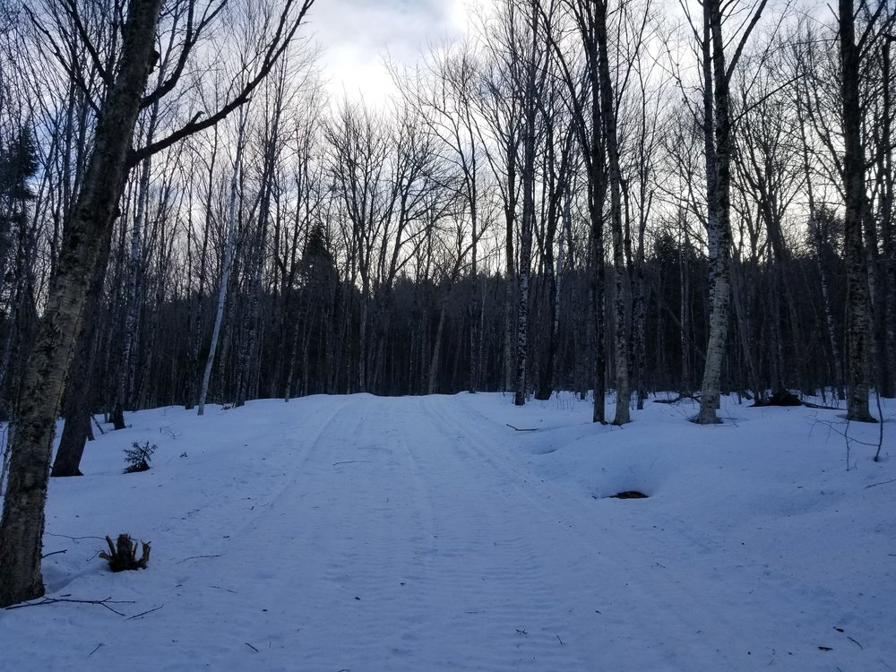 Trail #5 this morning
