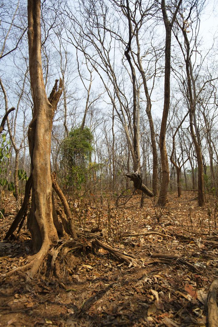 meditation_forest.jpg