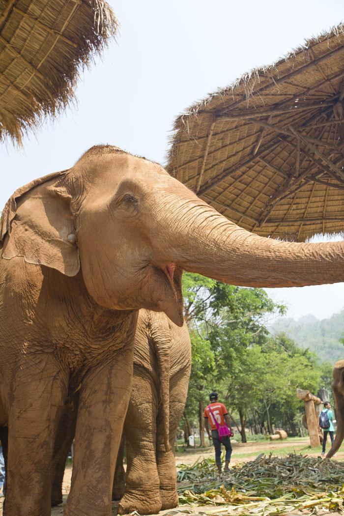 Elephant_Nature_Park_3.jpg