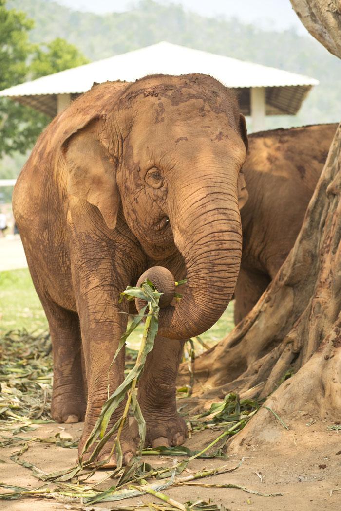 Elephant_Nature_Park_6.jpg