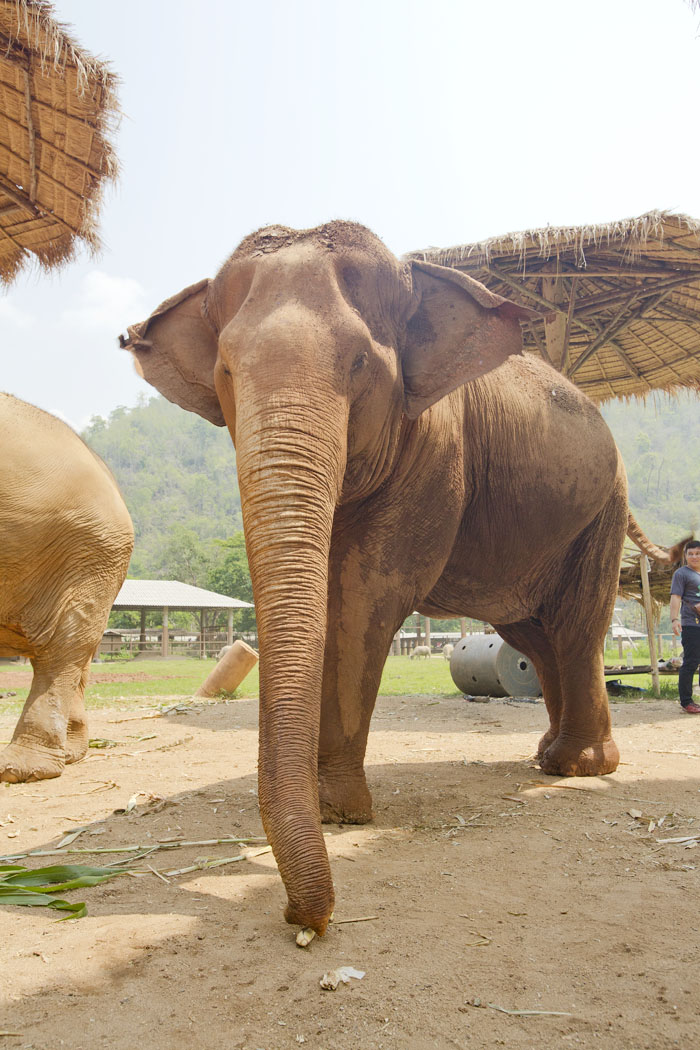 Elephant_Nature_Park_10.jpg