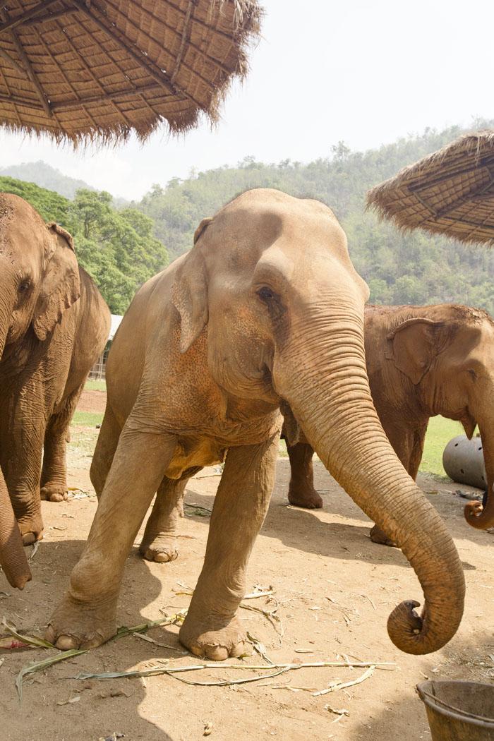 Elephant_Nature_Park_11.jpg