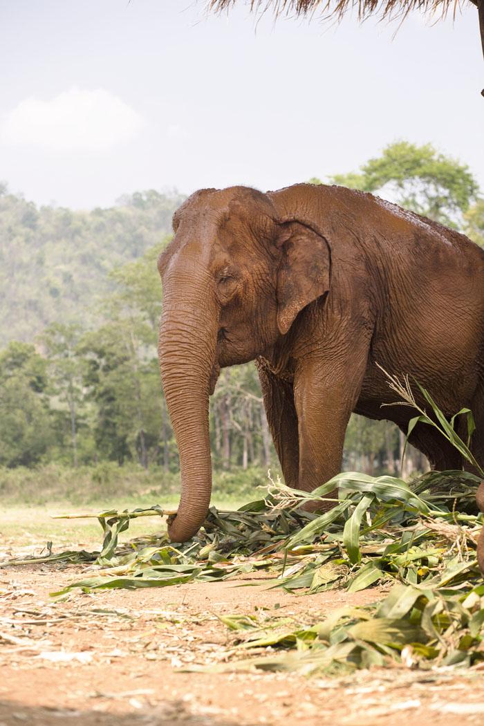 Elephant_Nature_Park_9.jpg