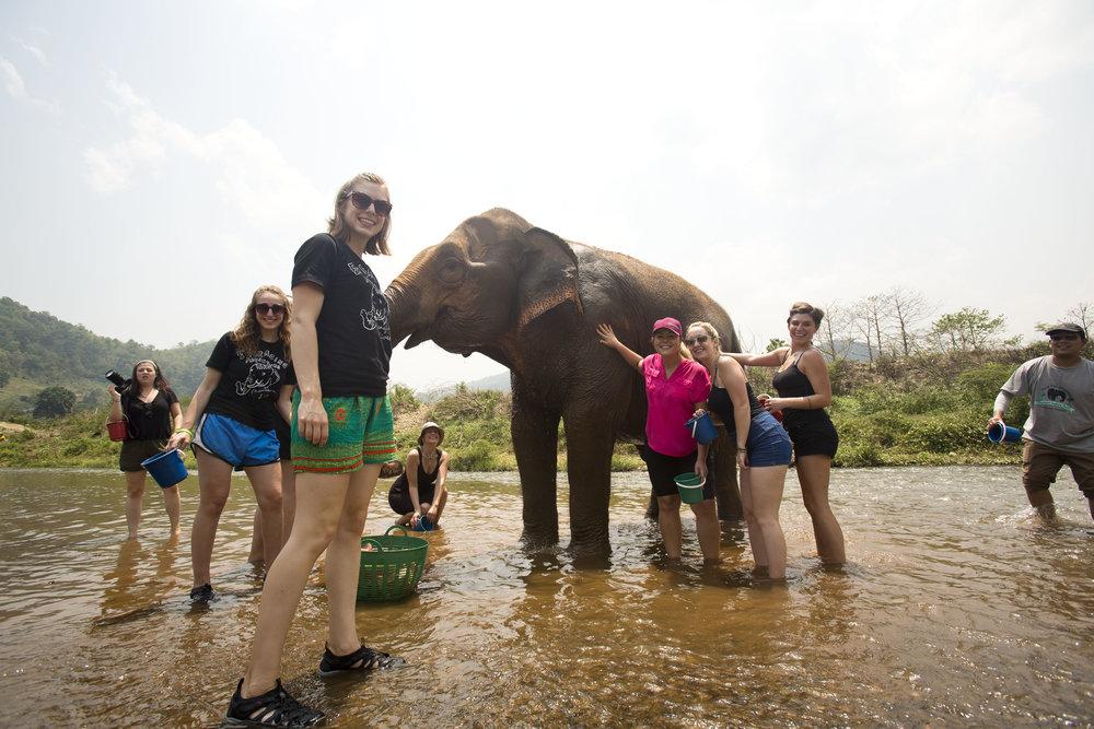 2017_Elephant_Park_17.jpg