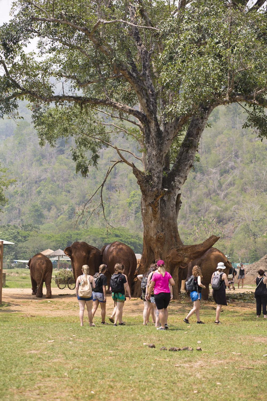 2017_Elephant_Park_18.jpg