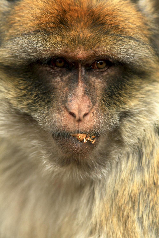 Alpha_Monkey.jpg