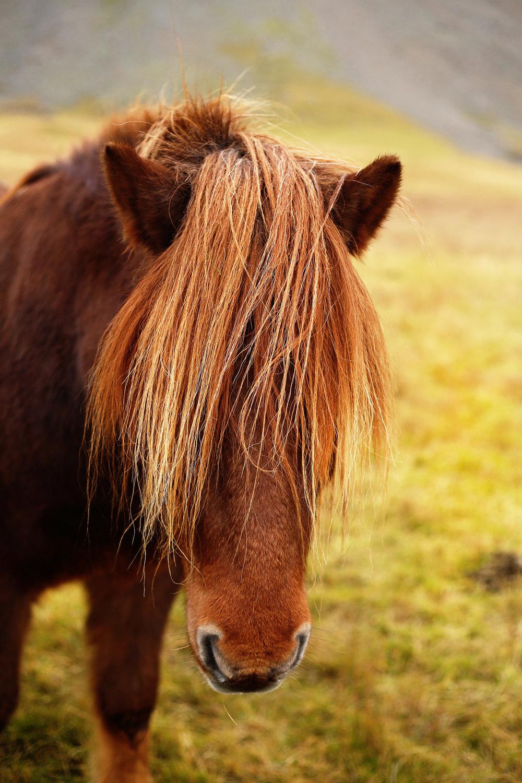 Horse_Mane_edit_2.jpg