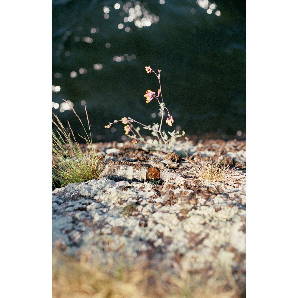 muskokaflowers.jpg