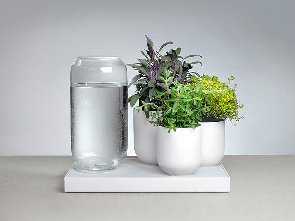 Pika Plants