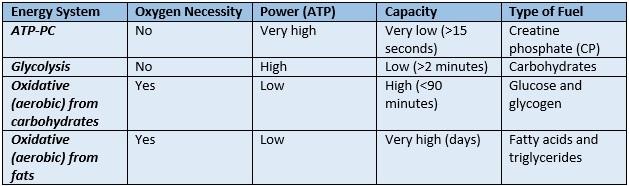 atp energy system