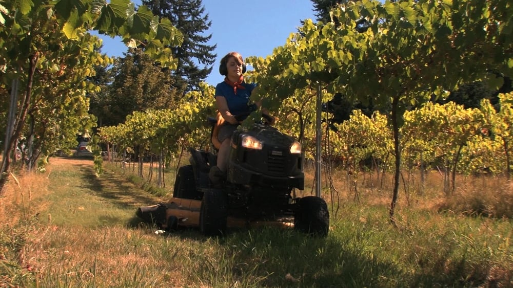 tractor girl vineyard BC