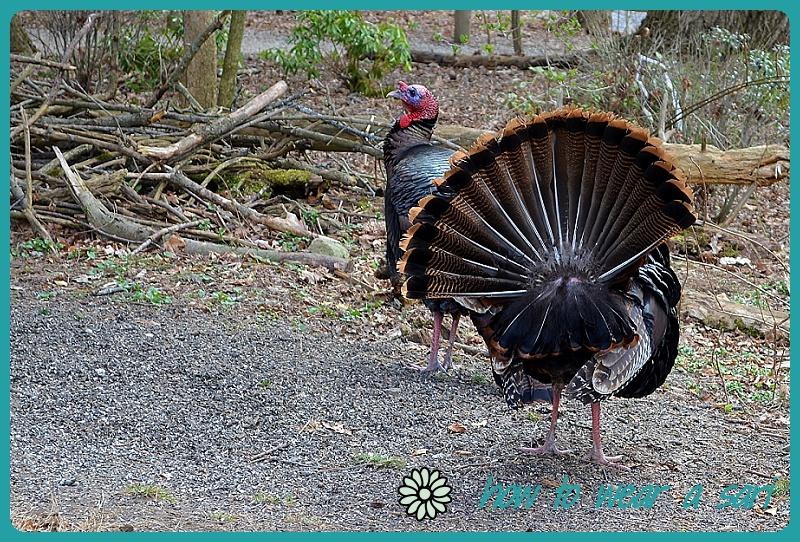 wearasari-may15-turkeys(2).jpg