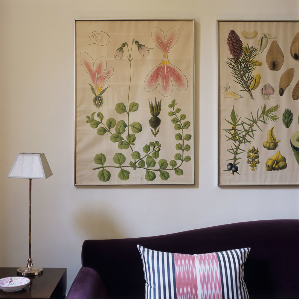 Watercolored botanicals line the wall of a Notting Hill drawing room