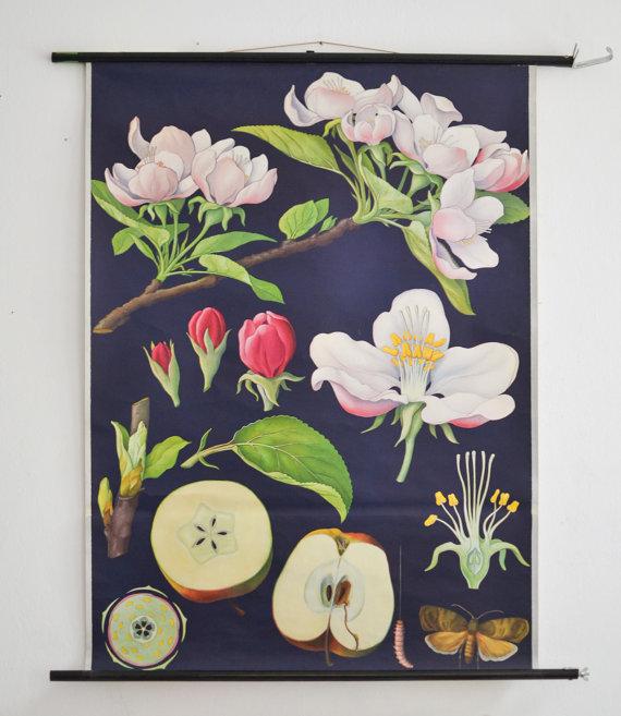 Etsy Vintage Botanical Print