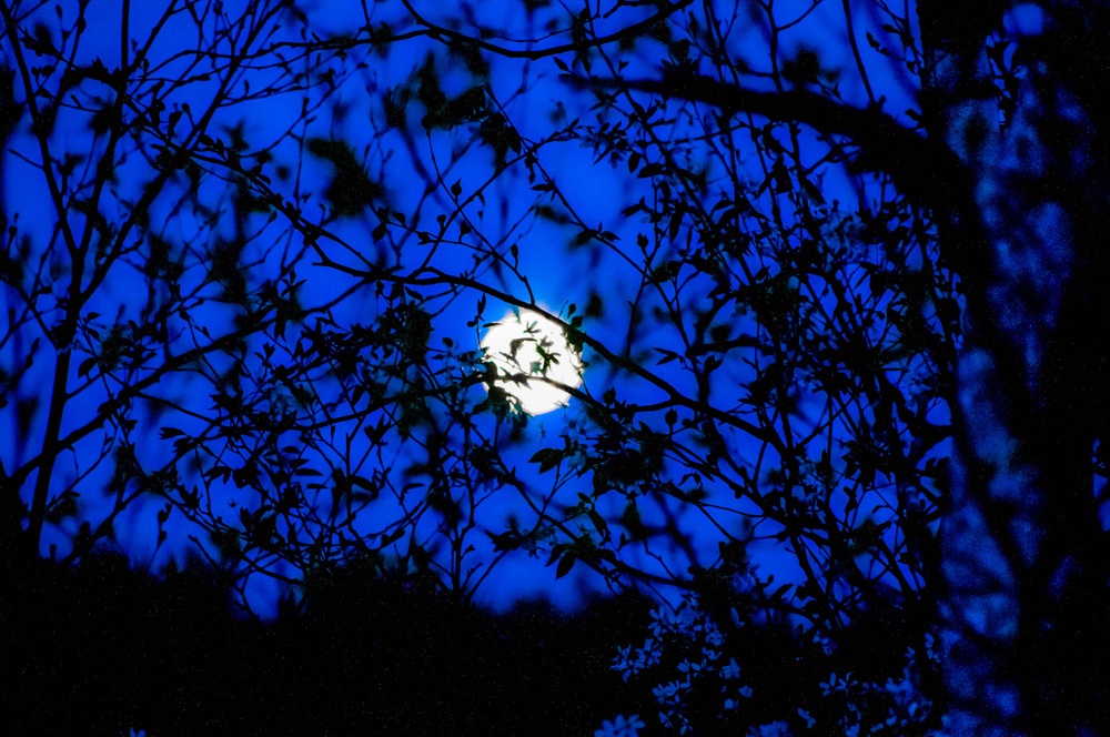 """Full Moon and Empty Branches"""