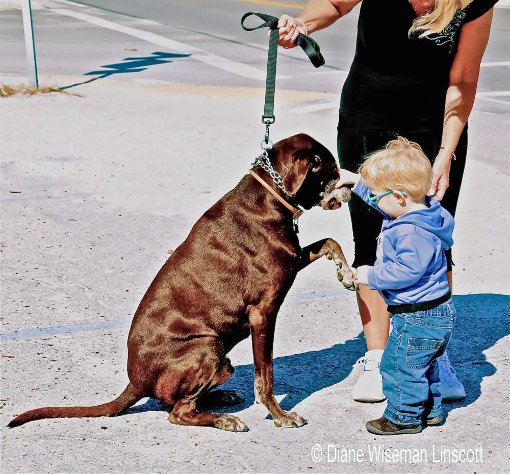 """""""Candid Children: Boy meets dog"""""""