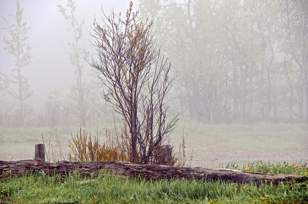 """Castine Canvas: Backshore fog"""