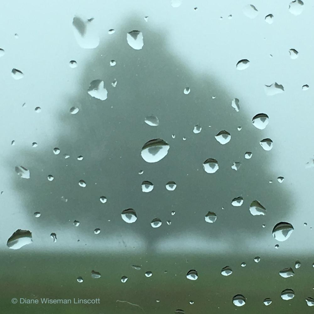 """Untitled Tree in Fog and Rain"""
