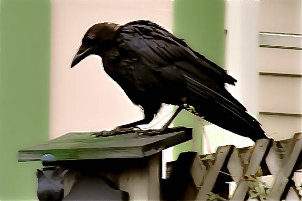 """Blackbird on the Fence"""