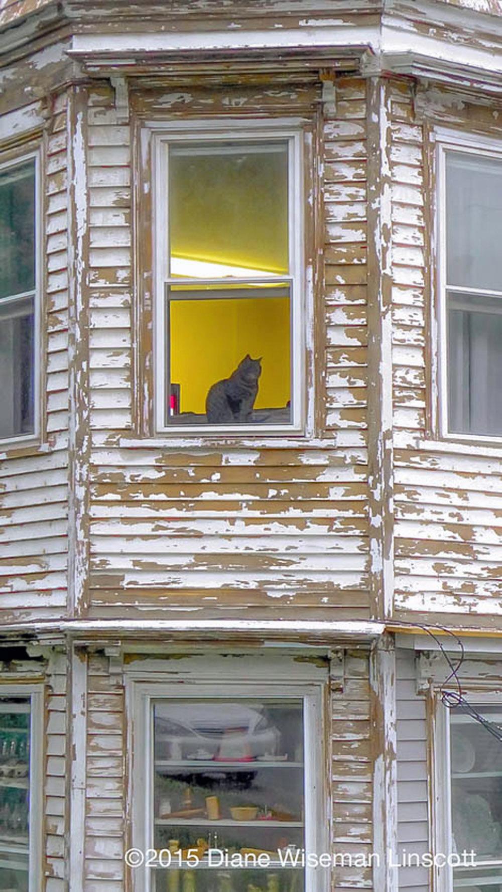"""""""Cat in Window"""""""
