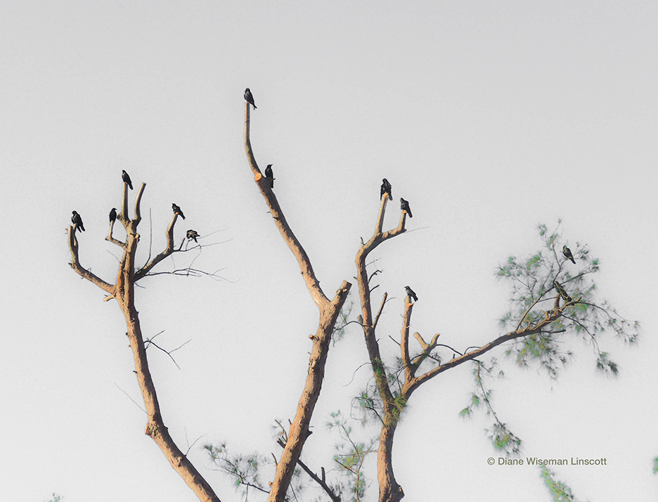 """My Blackbird Tree"""