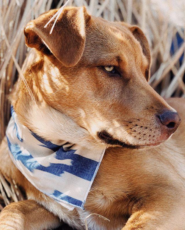 Finn wearing the Diamond Streak Ikat bandana. Available from link in bio.