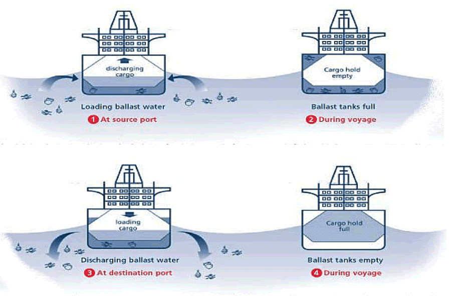 Loading and discharging of ballast water allows for the spread of invasive microorganisms and fish species.  Via NOAA