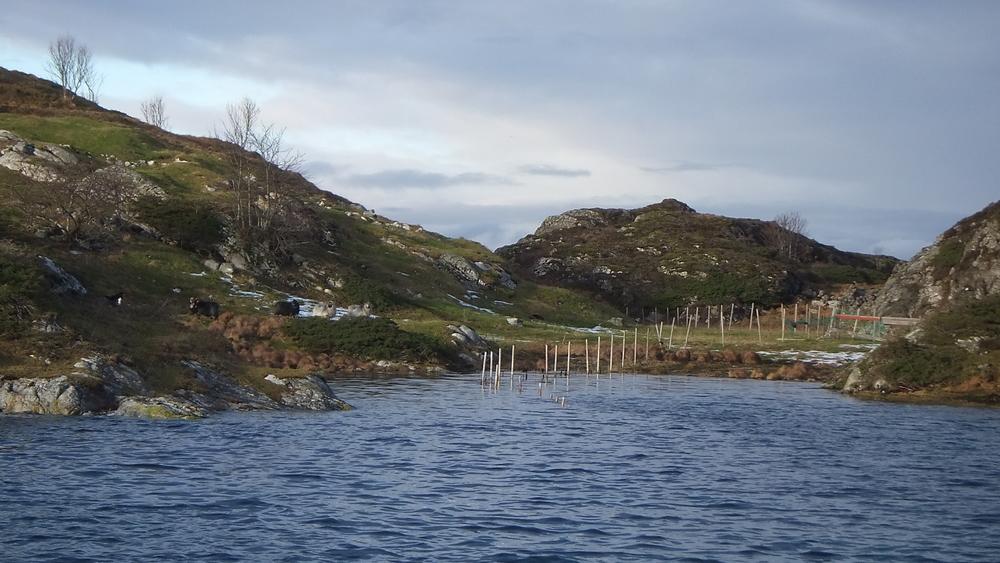 Coastal images 17.jpg