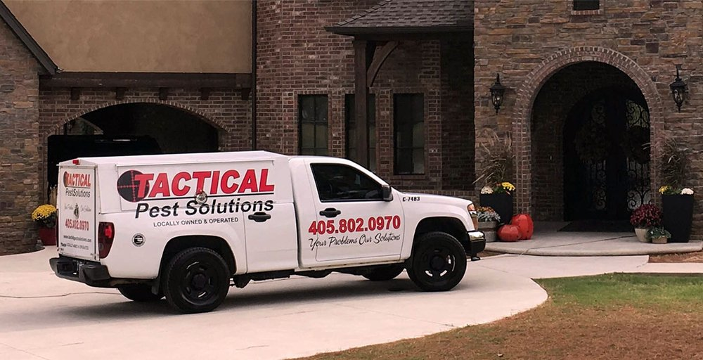 pest  solutions  okc metro  prevent  bugs  creepy crawl  ants  crickets  roaches  scorpions  bed bugs  spiders  cockroaches  rodents  termites  exterminators  home  office  quality  service  rid  eliminate