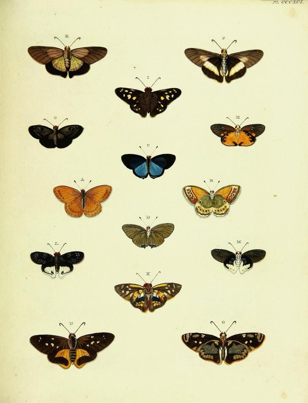 Vintage Butterfly Printable Art