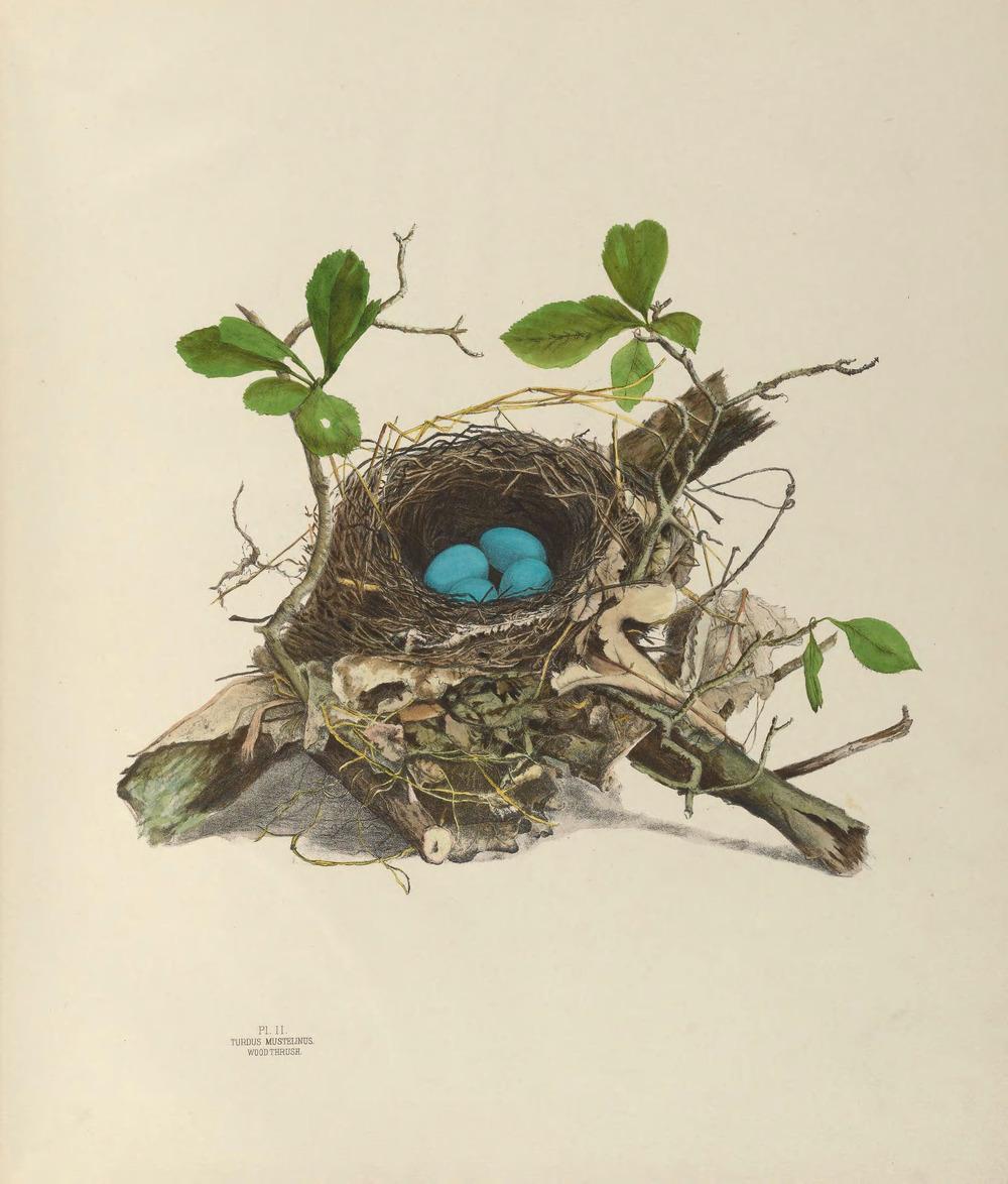 Vintage Printable Art Birds