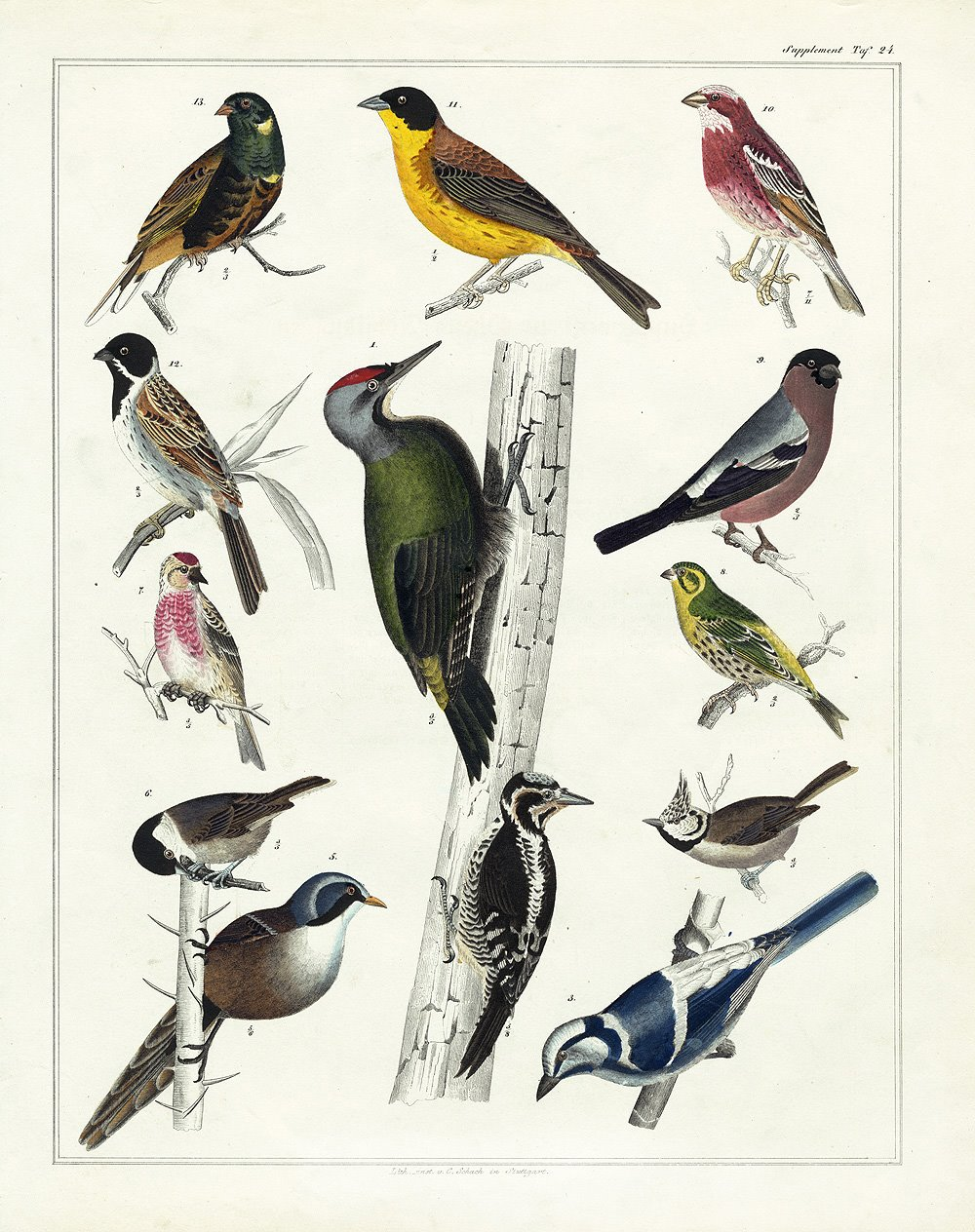 Vintage Printable Bird Art