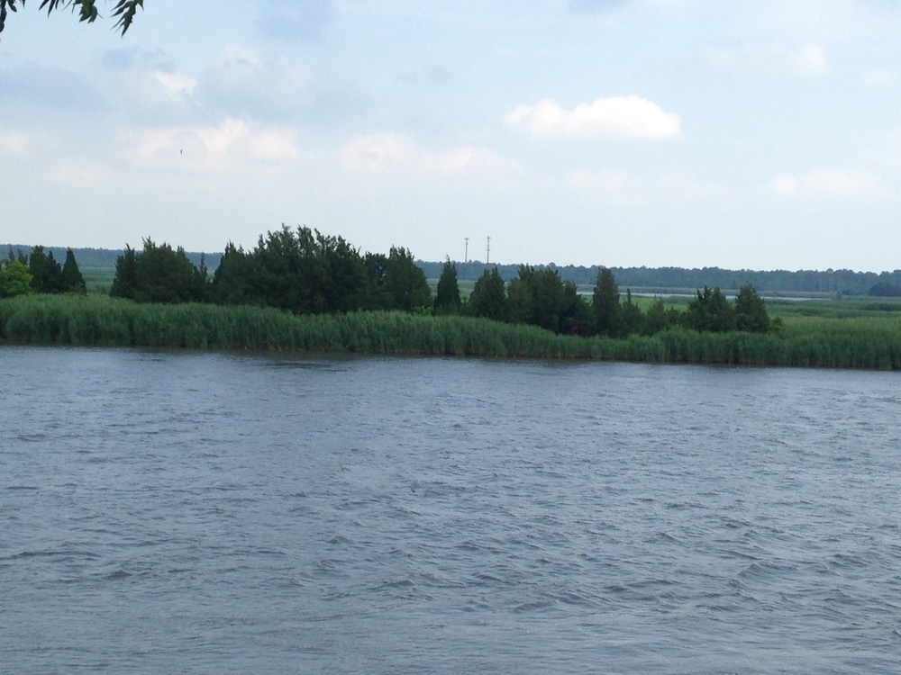View of the Maurice River