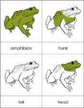 parts of amphibian1(1).jpg