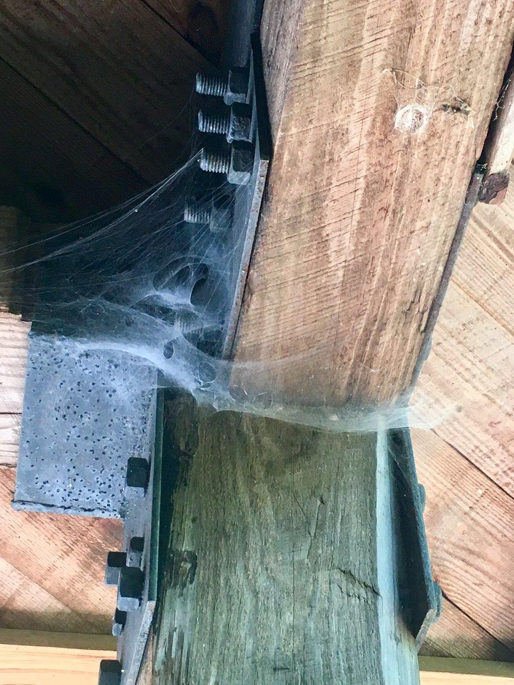 9. Spider web.jpg